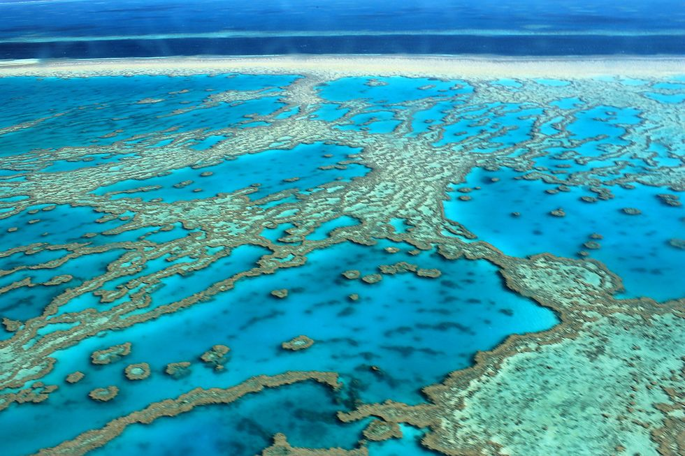 Extensive Coral Bleaching in the Pacific Shocks Scientists