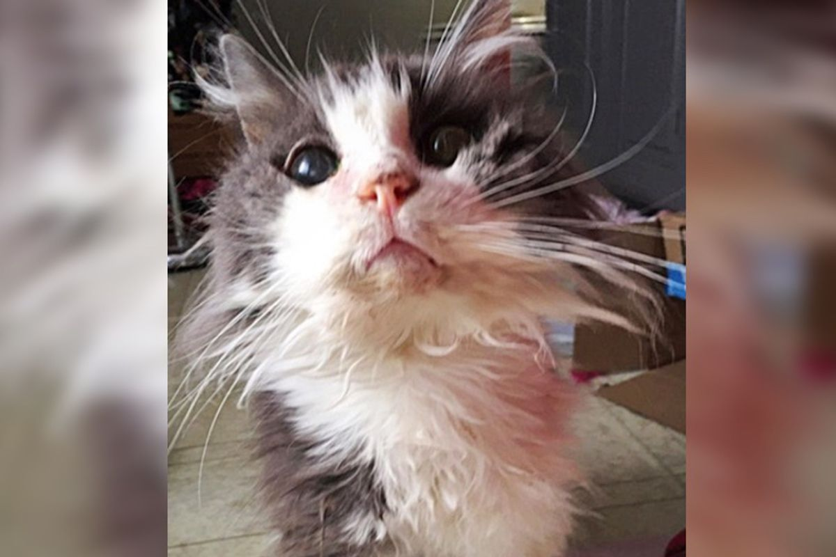 """19 Year Old """"Unwanted"""" Cat Can't Stop Purring After Couple Saves Him from Shelter…"""
