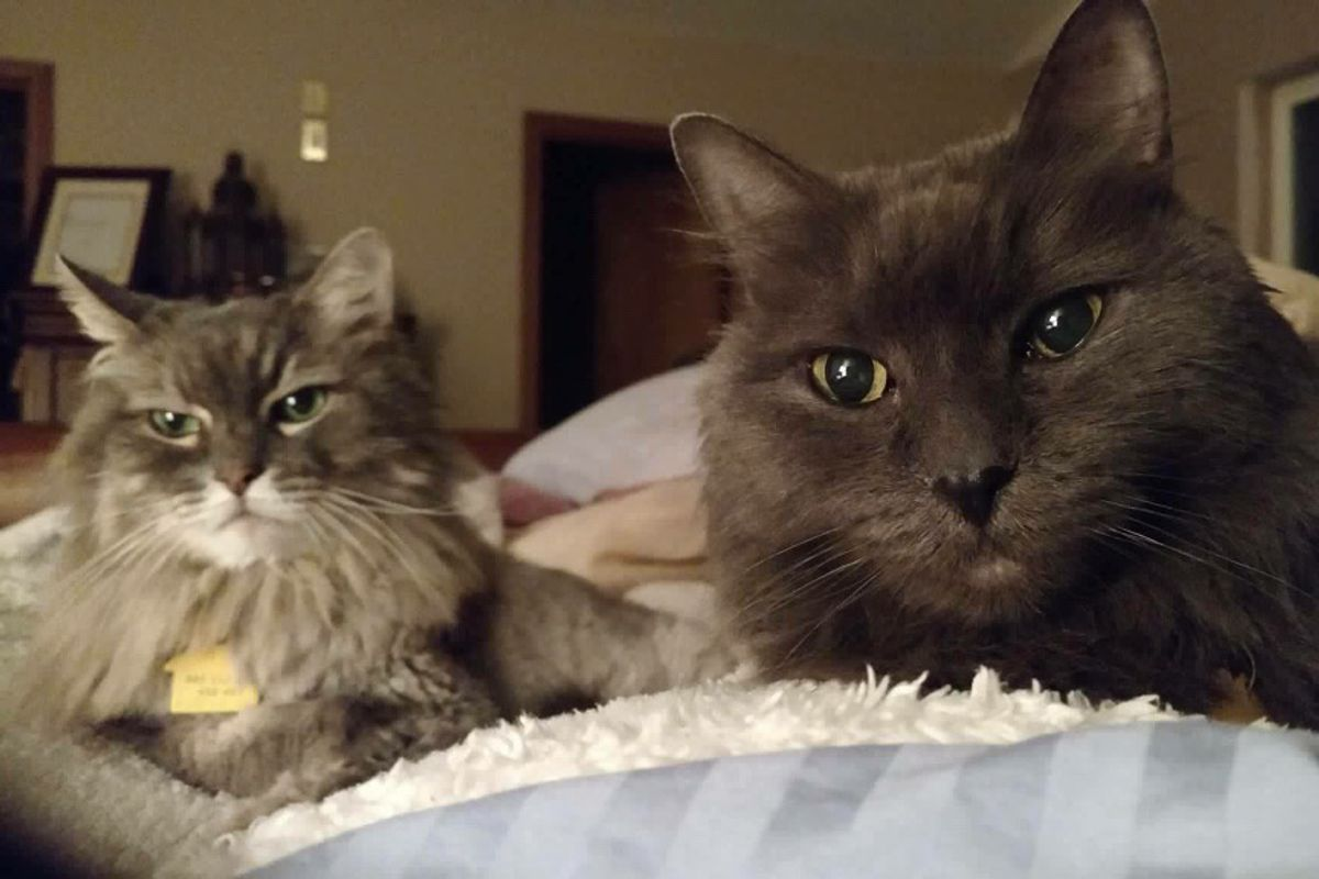 90 Year-old Man Finds Help for His 13-year-old Cats He Saved from Birth...