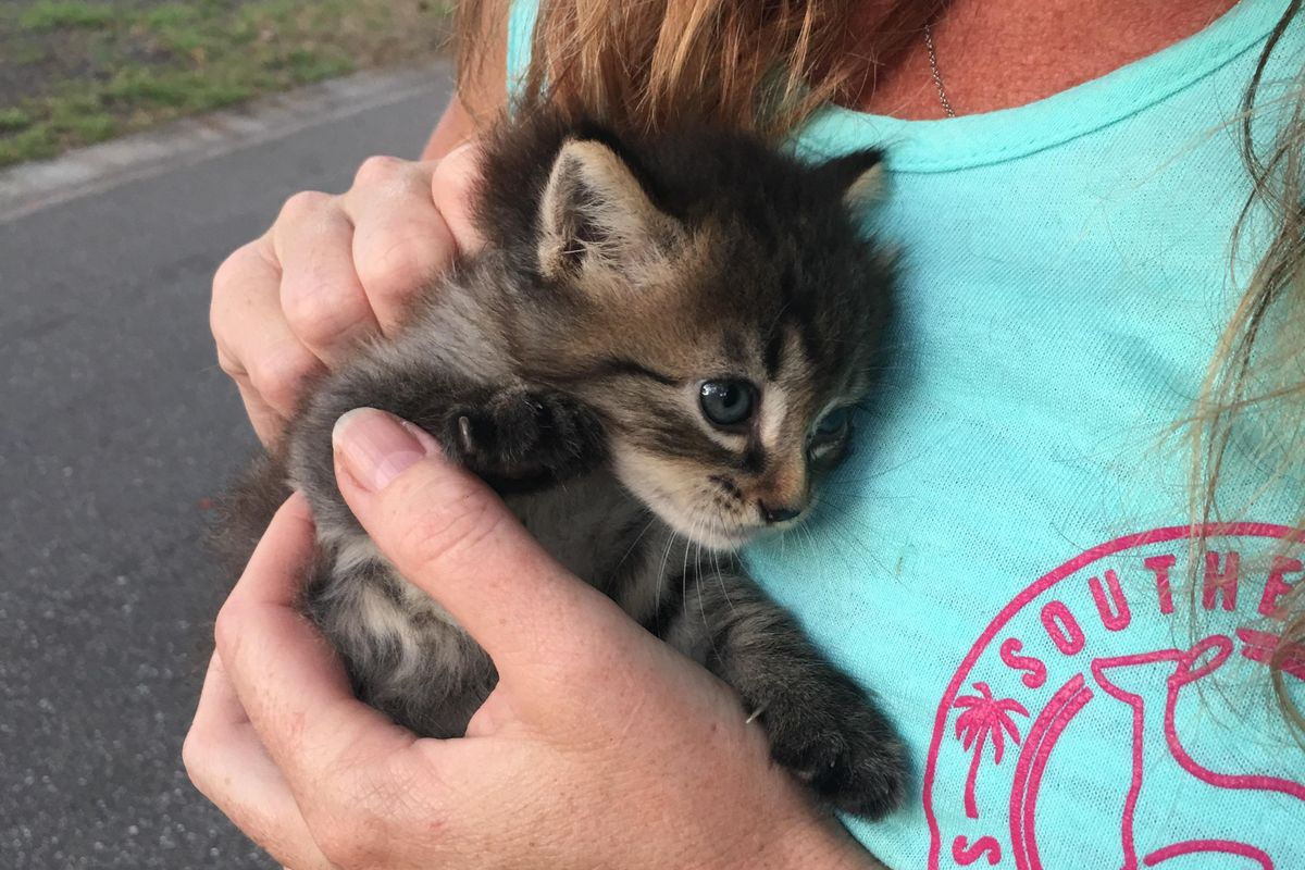 Kitten Found in Woods Clings to Her Rescuers, Asking Them to Be Her Forever Humans...