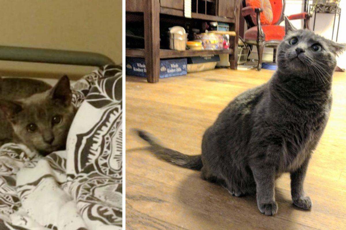 Woman Helps Stray Kitten Get Her Confidence Back in These Adorable Photos...