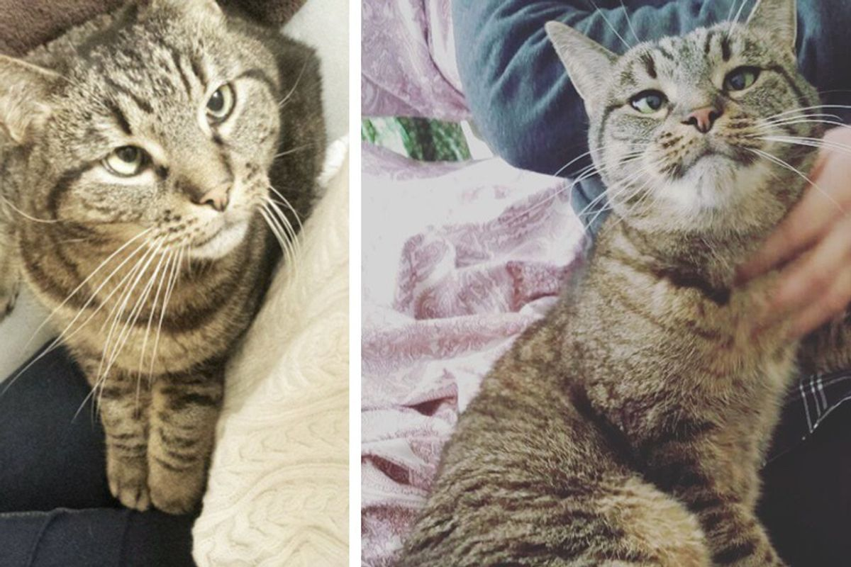 Woman Asks Shelter For Special Needs Cat But the Kitty Finds Her Instead...