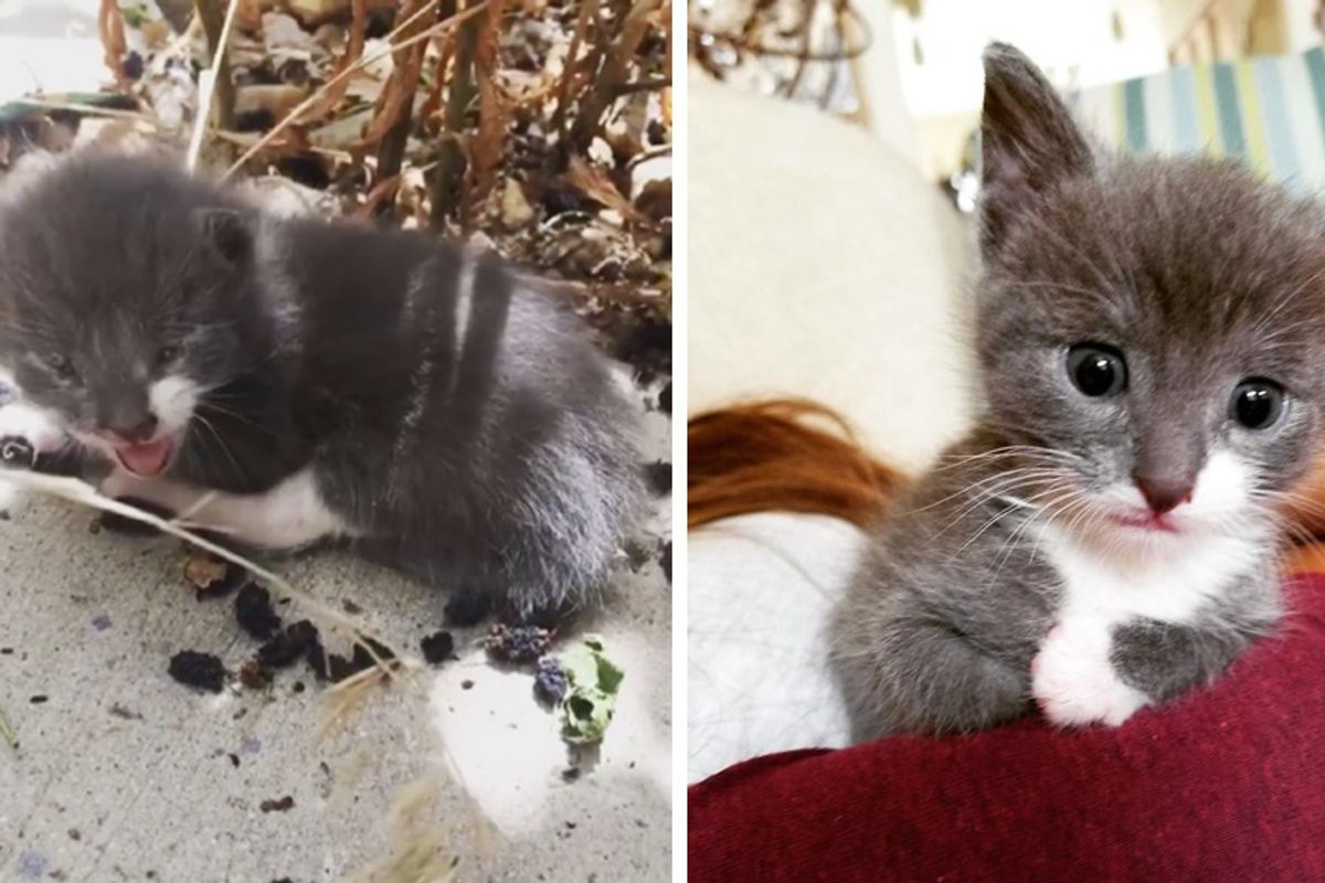 Motherless Kitten Found Meowing in Backyard Turns Her Life Around In These Beautiful Photos…
