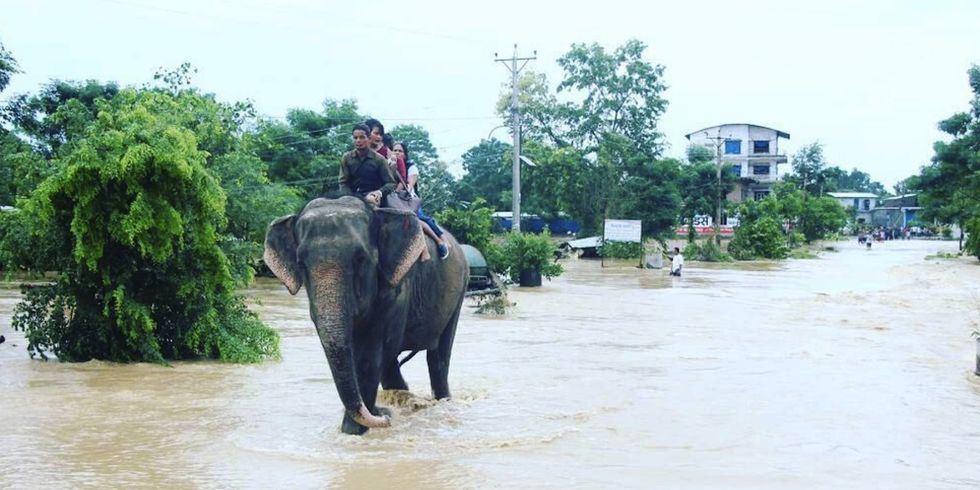 Elephants Rescue Hundreds of People From Nepal Floods