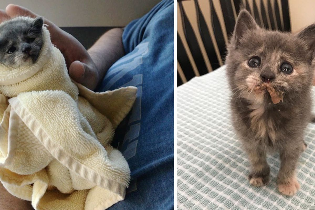 Orphaned Kitten Found at Apartment Experiences Cuddle and is Hooked, Heartwarming Photos!
