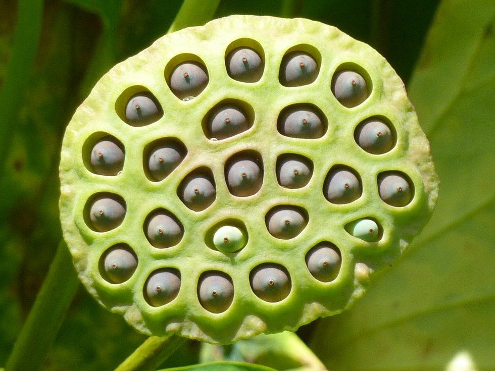 If This Toad Birth Makes You Squirm You Might Have Trypophobia