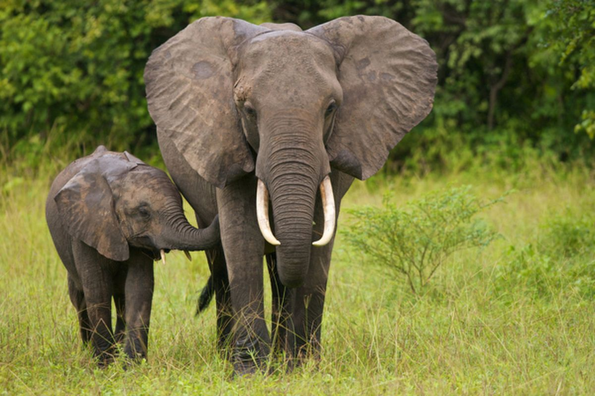 4 Ways That You Can Help Save The Elephants