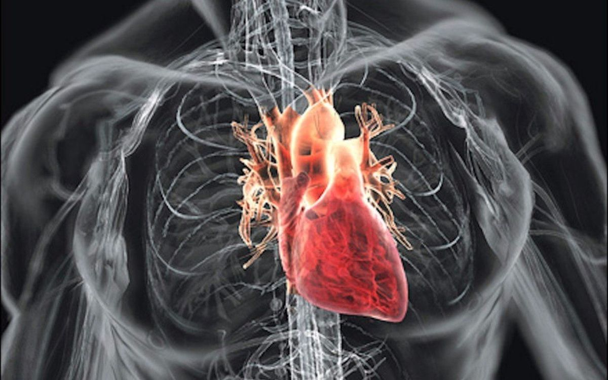 Spider Silk Protein May Be Useful For Engineering Artificial Cardiac Tissue