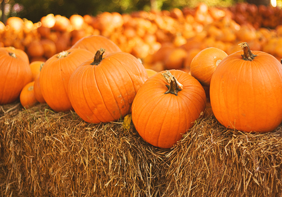 21 Things To Do On Fall Break