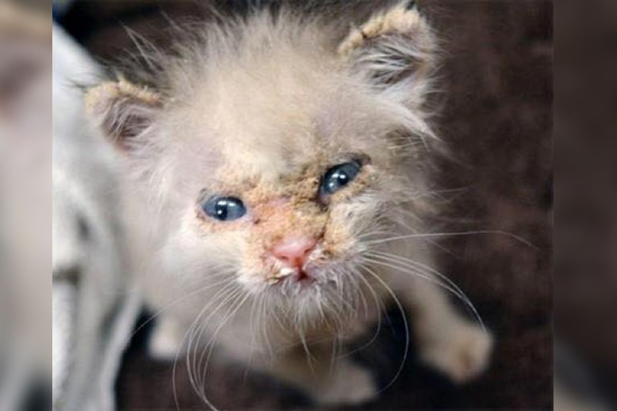 Kitten Covered in Crust Gets Help and Surprises Rescuers With His Adorable Face