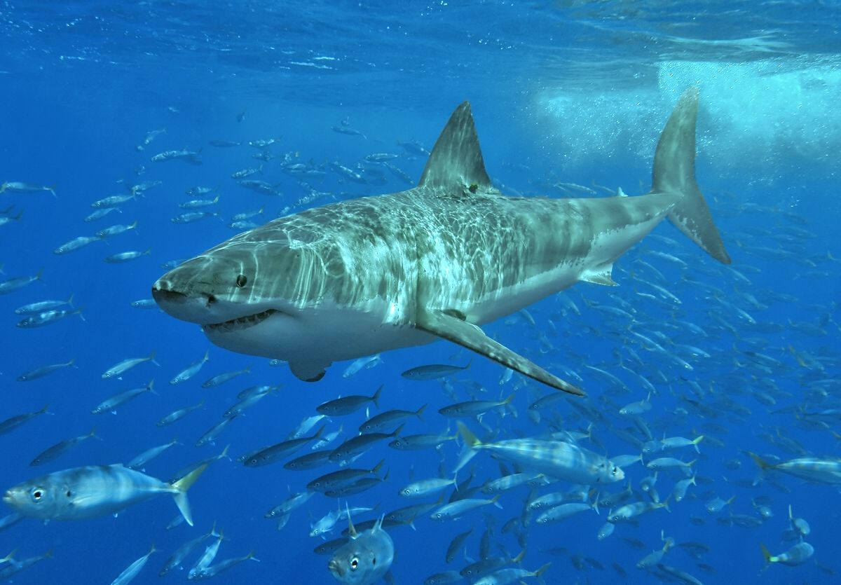 7 Signs A Shark Might Bite