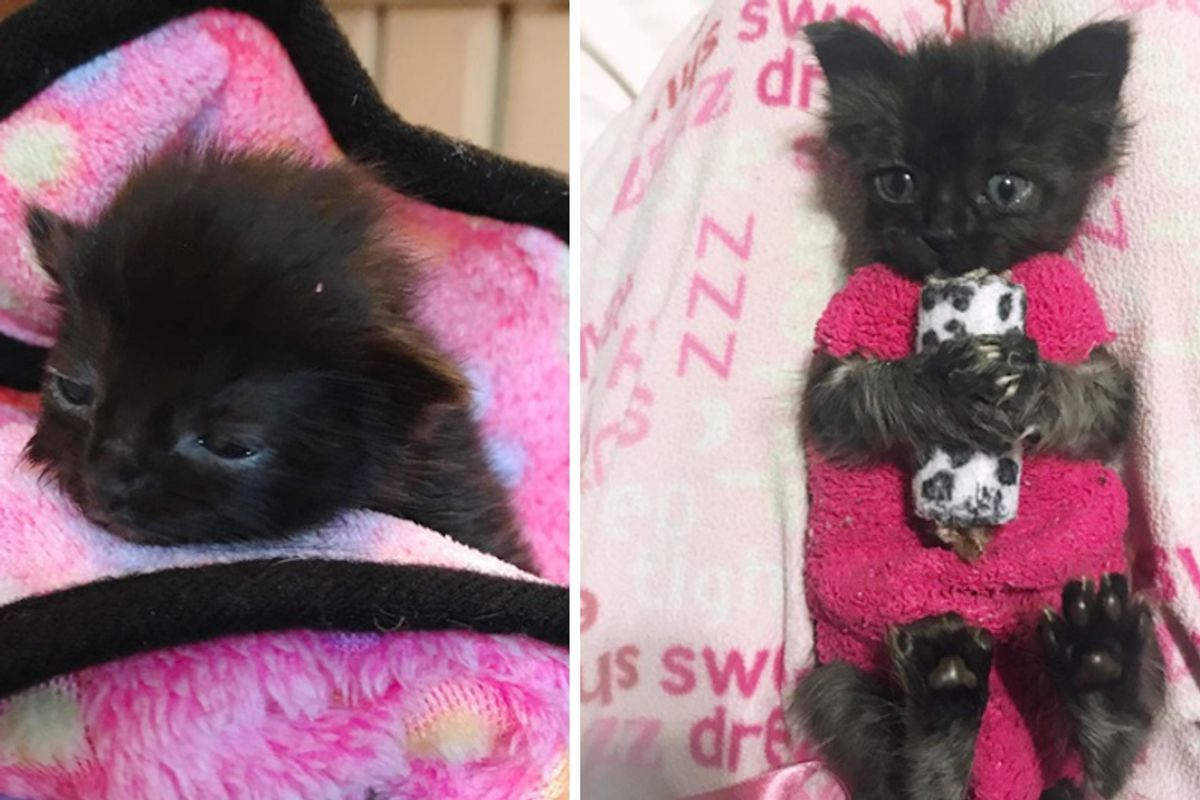 How These Sock Sweaters Protect a Tiny Kitten and Help Her Heal