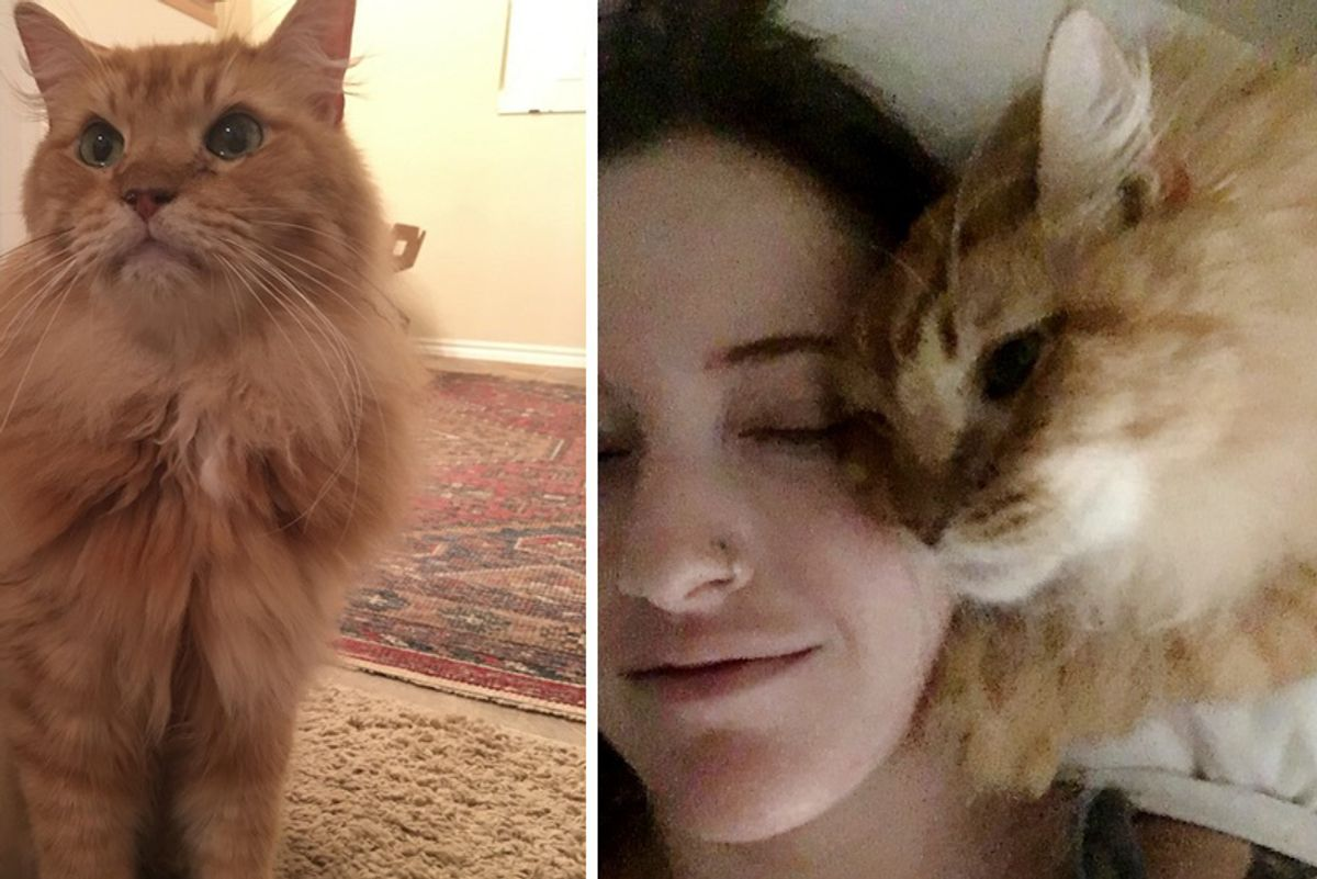"""8-year-old """"Lion"""" Cat Finds Human He's Been Waiting For and Won't Let Go..."""