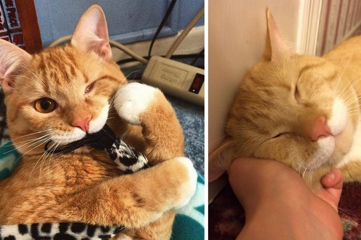Woman Asks Shelter for Special Needs Cat and Finds One-eyed Kitty Wobbling Up to Her