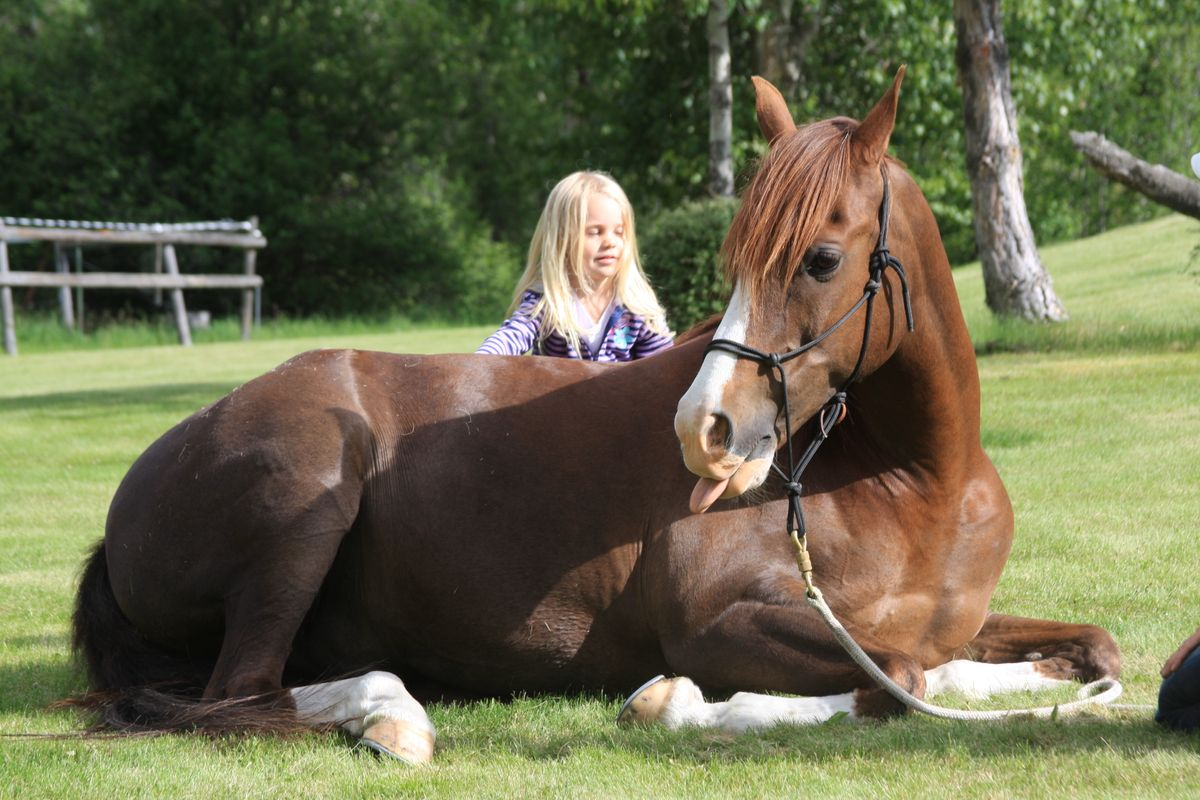 Should I Buy My Child A Horse Or Pony?