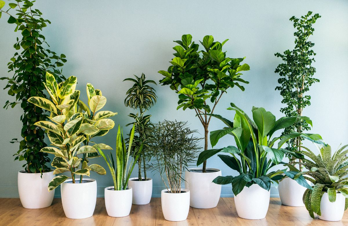 10 Houseplants To Banish Your Anxiety