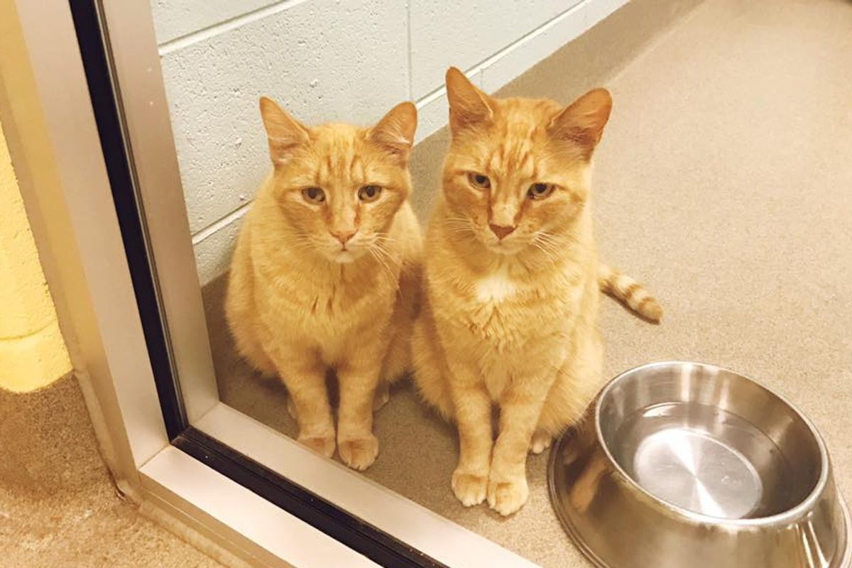 Couple Saw 12-year-old Cat Brothers at Shelter Looking for Home and Just Knew