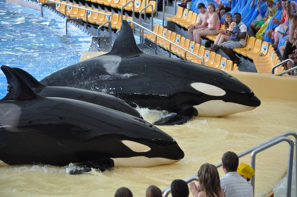 You Shouldn't Support SeaWorld: There's Nothing Entertaining About Holding Animals Captive
