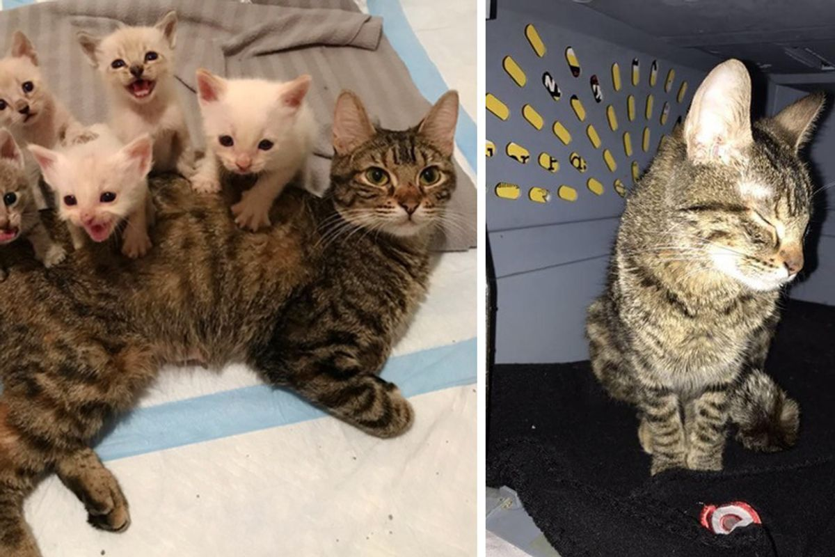 Cat Mama Refuses to Sleep Protecting Her Kittens Until They are Safe!