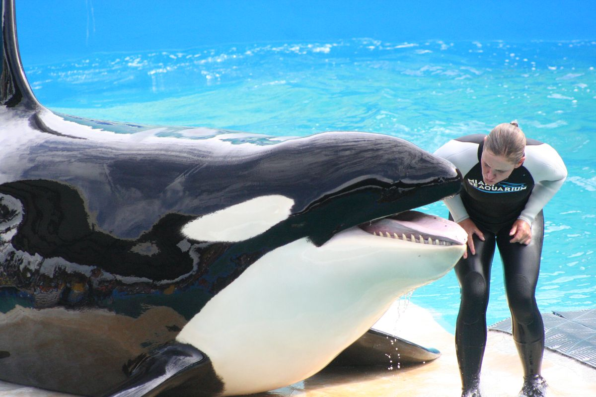 Why Everyone Should Care About Orcas Being Kept In Captivity