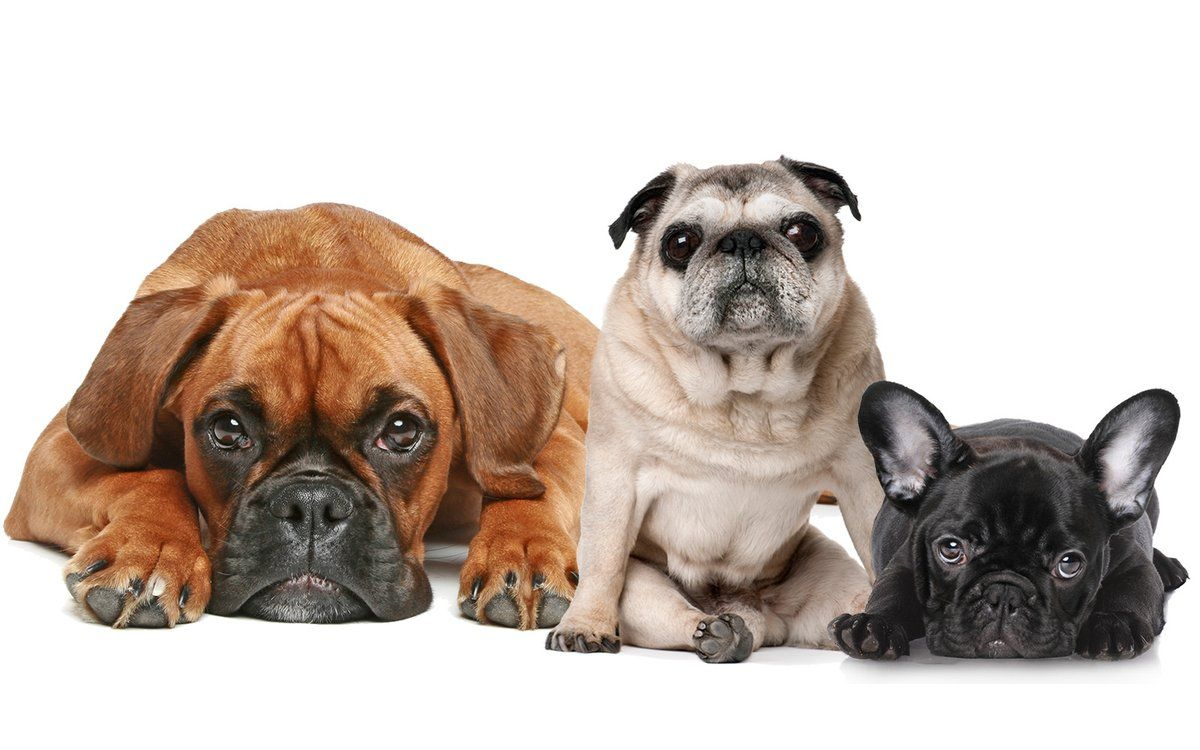 8 Ways Having A Dog Makes Your House A Home