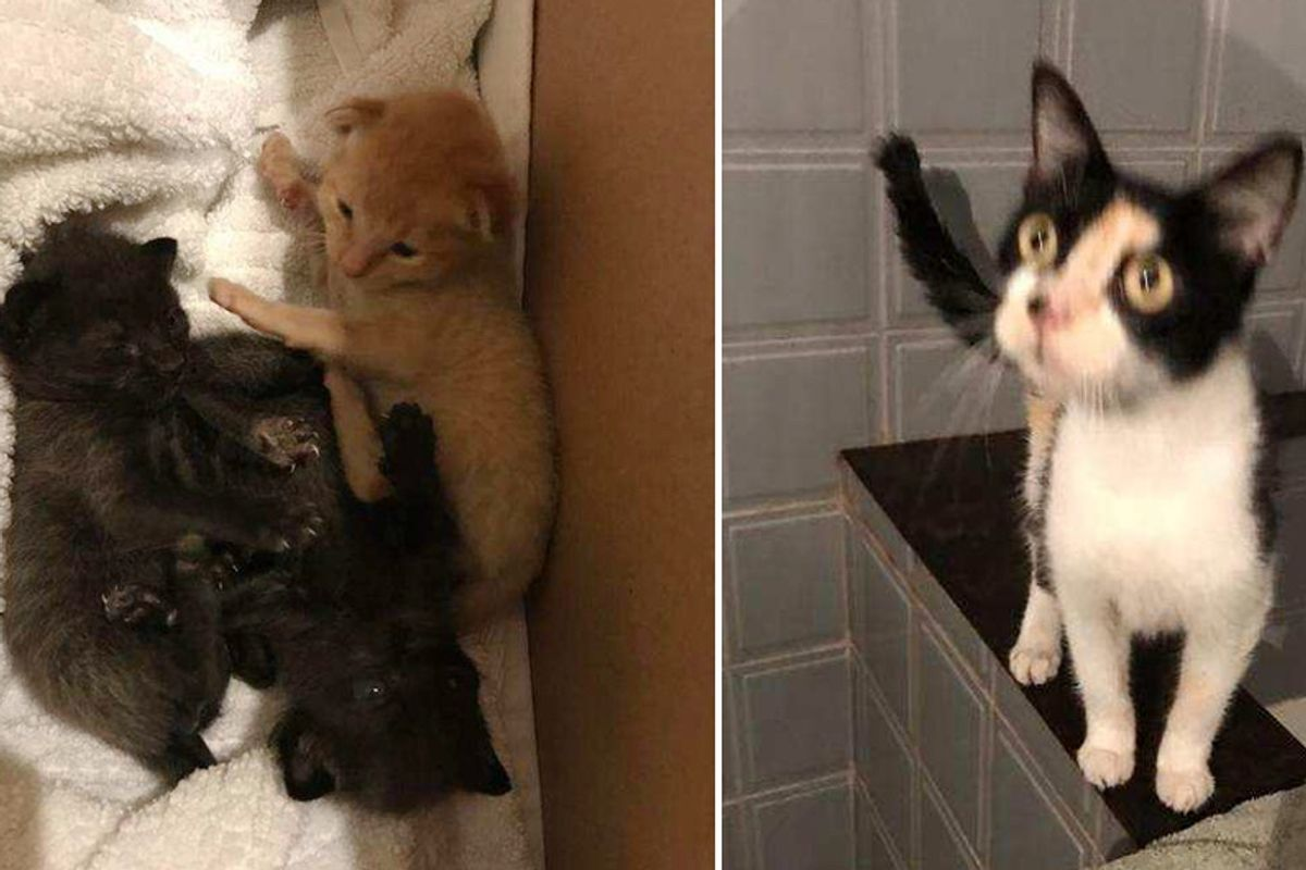 Houston Man Saves 3 Kittens from Hurricane and Goes Back to Find Their Mother...