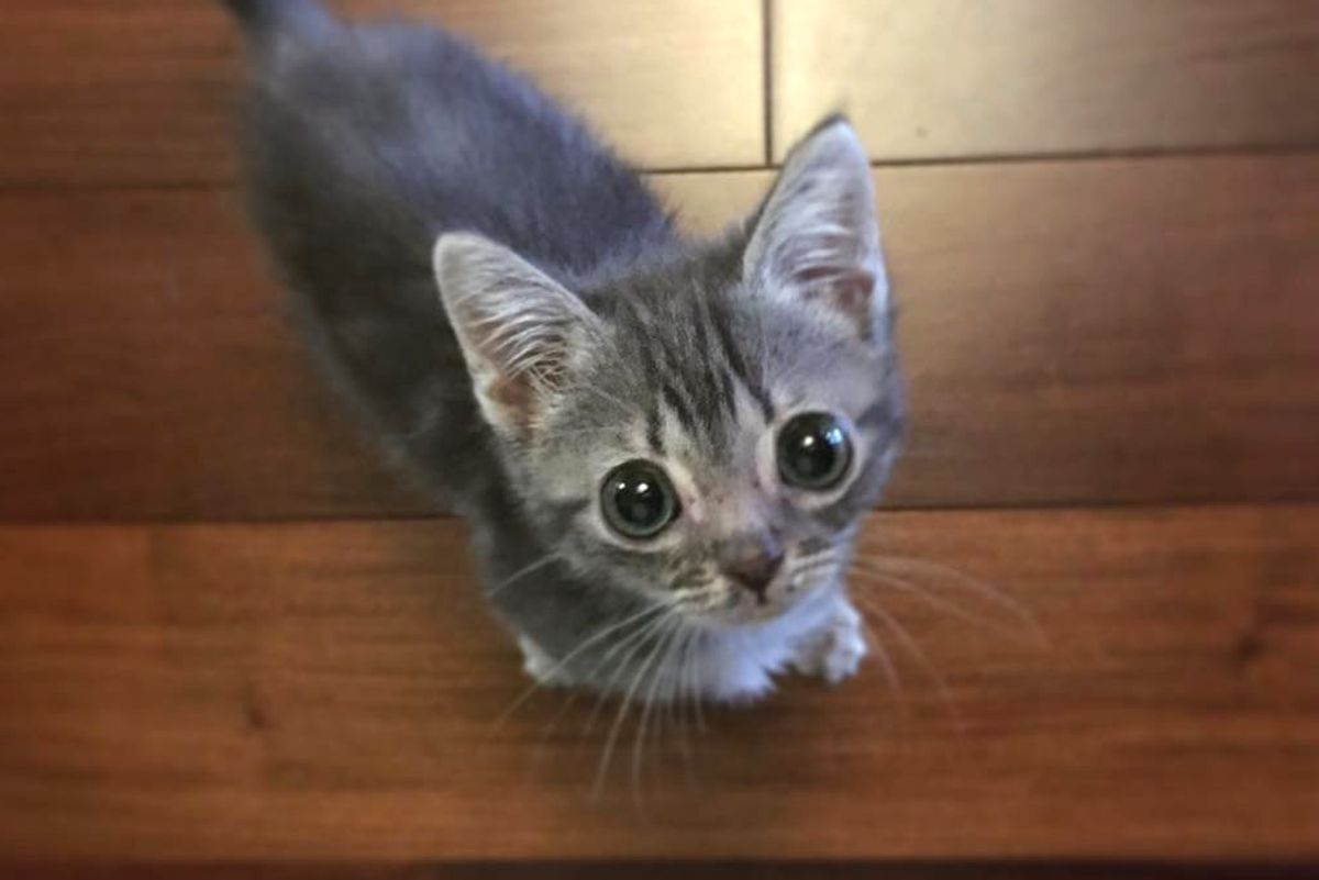 Kitten 1/3 Size of Her Siblings Determined to Get Bigger Despite Her Rare Condition...