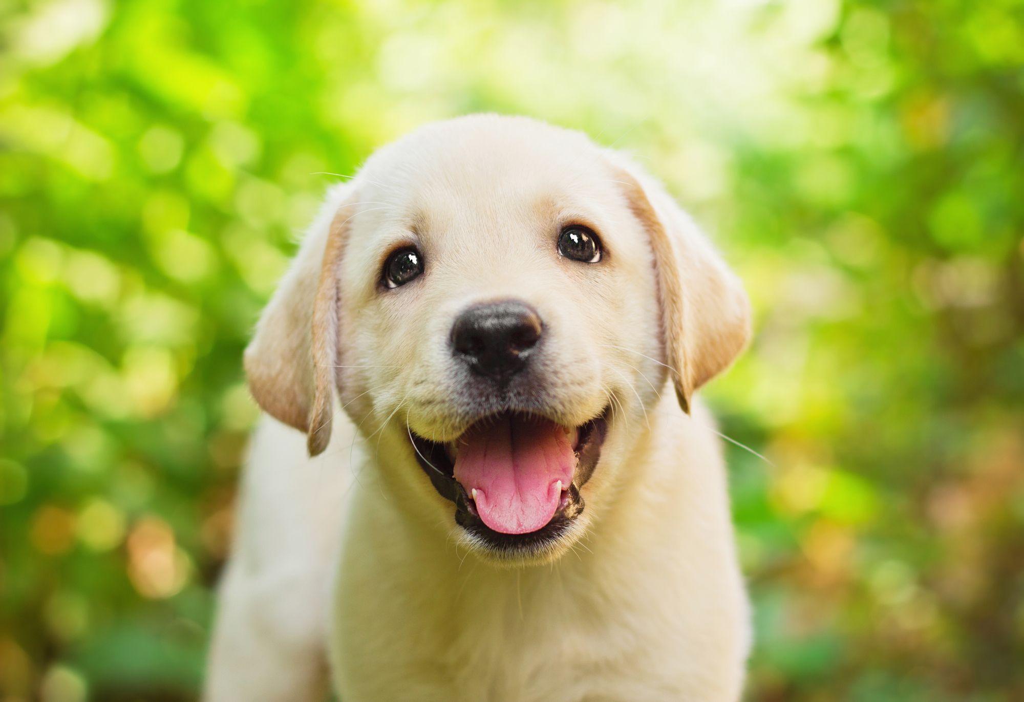 10 Cutest Dog Breeds