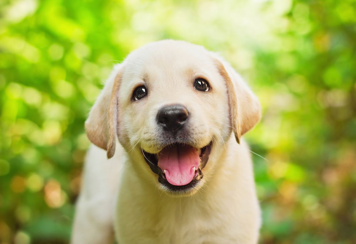 10 Cutest Dog Breeds That We Truly Don't Deserve As Humans