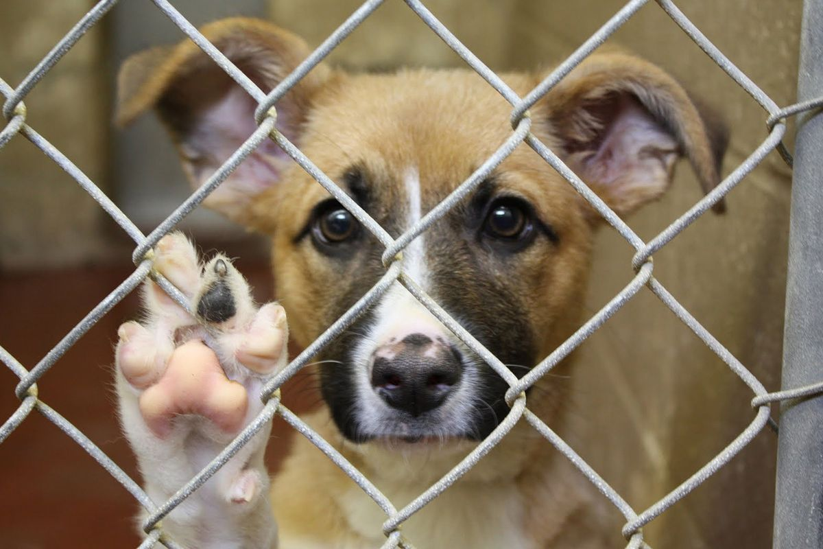 Adopt Don't Shop: Why Choose To Rescue?