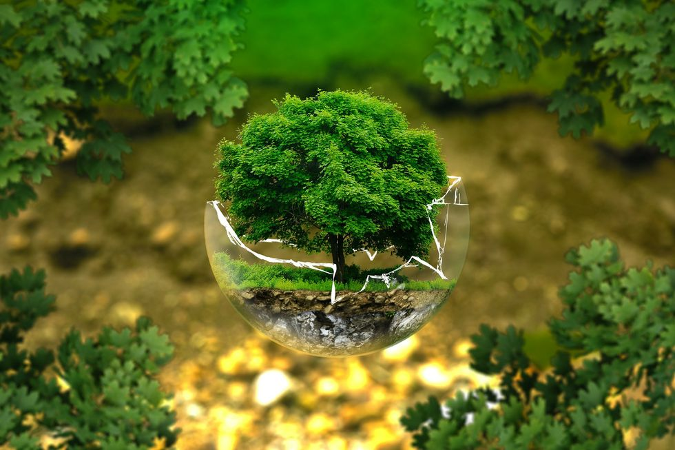 Tiny tree inside a broken globe
