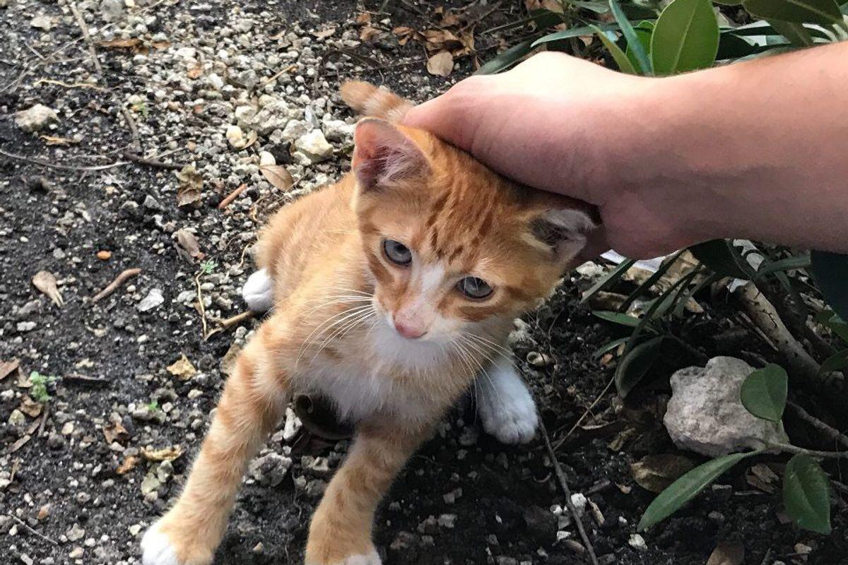 Man Saves Kitten He Befriended Outside His Work Before Hurricane Irma Hits