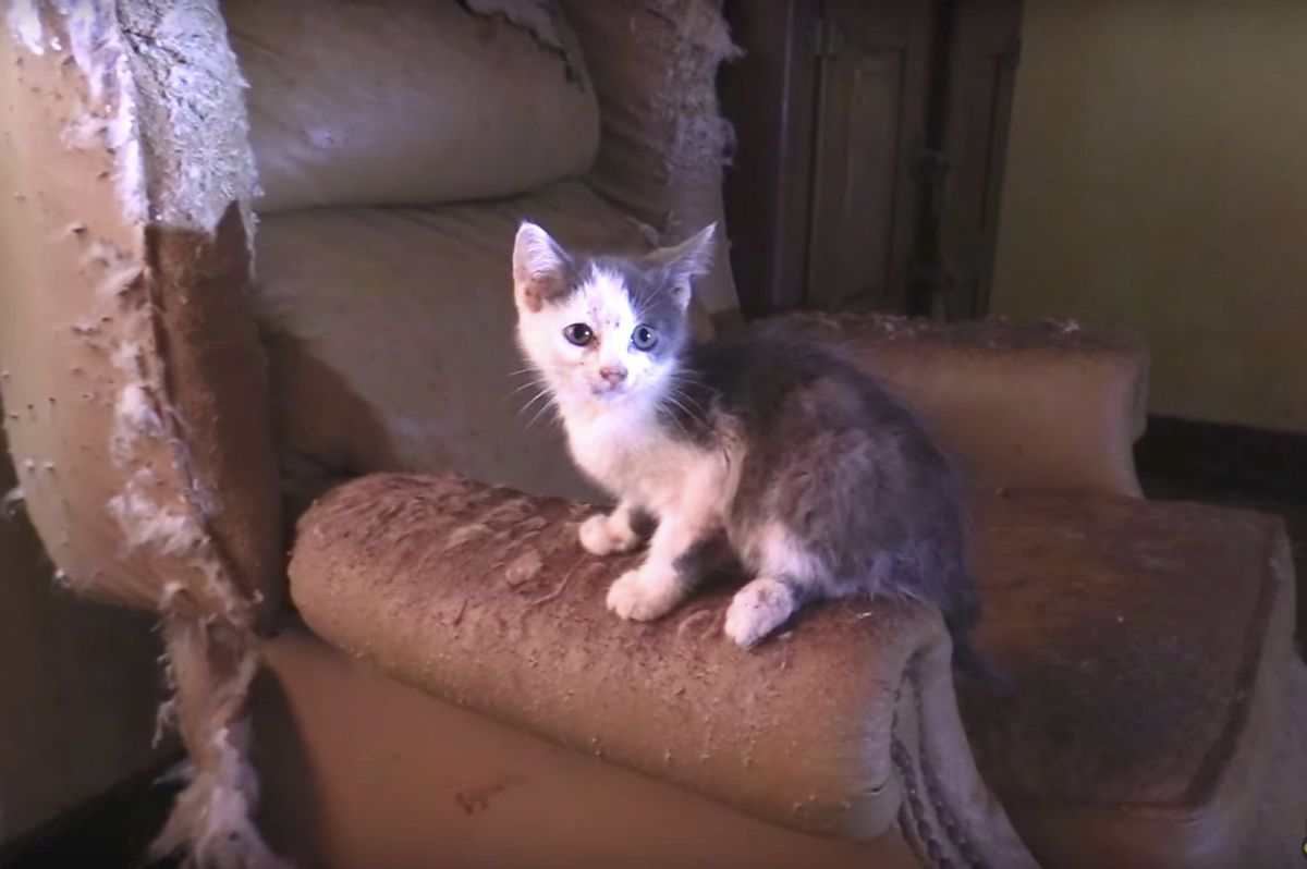 Cat Man and Team Saved 40+ Cats and Kittens from Abandoned Home and Turned Their Lives Around