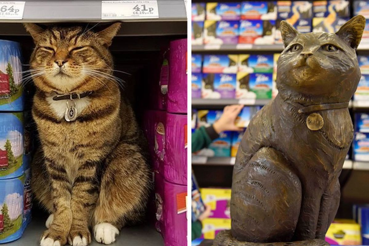 Store Cat Immortalized with His Own Statue at Supermarket That He Made His Second Home