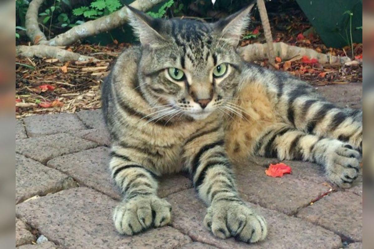54 Hemingway Kitties Safe and Well After Hurricane Irma Slammed Florida Keys