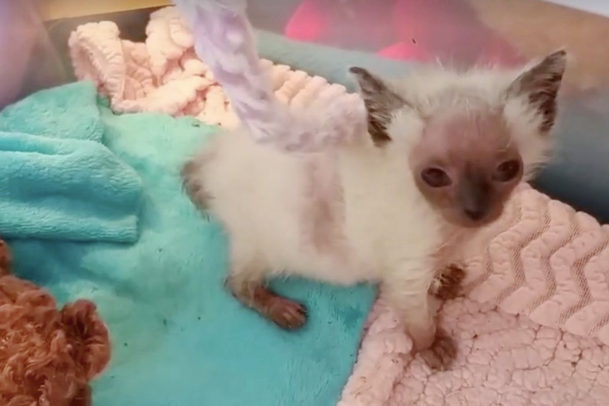 """Kitten Mysteriously Got """"Alien"""" Face, Is Turned Around by Love"""