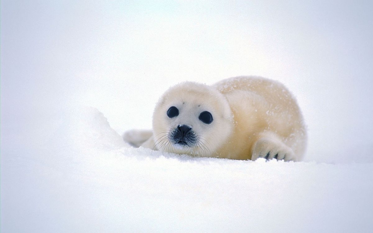 How Can We Help The Seals