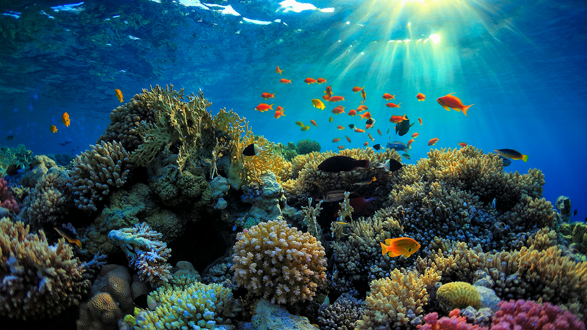 The Great Barrier Reef Is In Major Danger