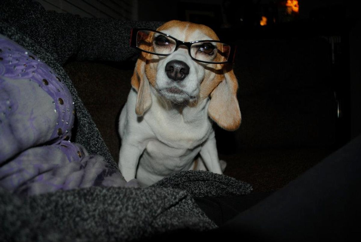 14 Reasons Why Beagles Are Life