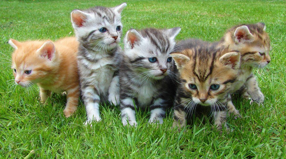6 Benefits Of Having Animals In Dorms
