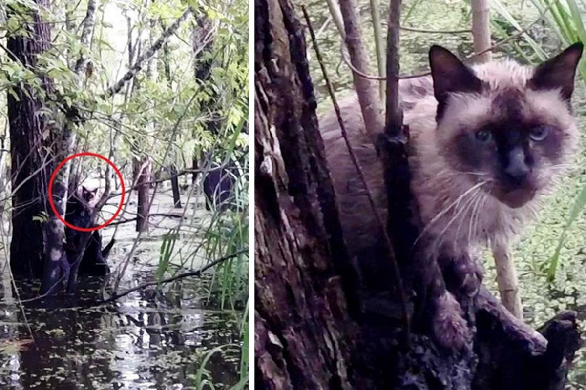 Brave Man Saves Crying Cat Stranded for Days in Deep Swamp!