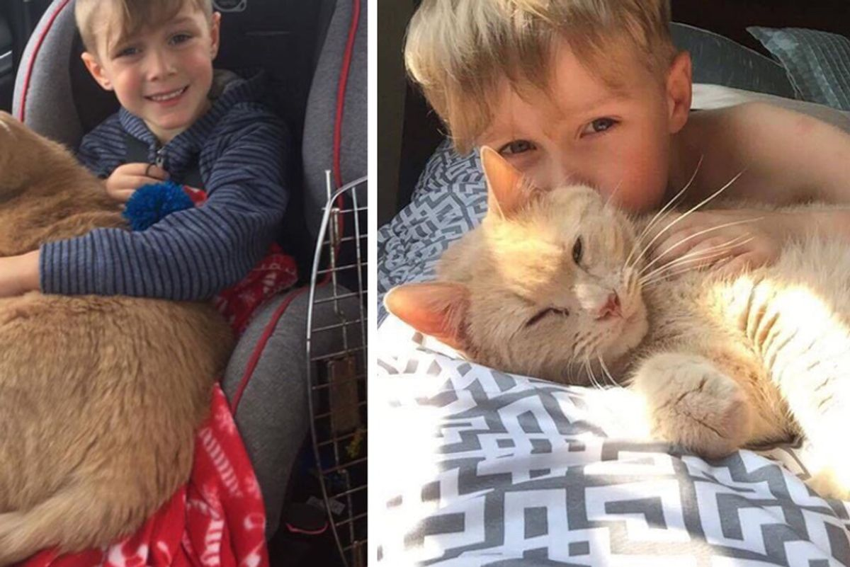Young Boy Could Adopt Any Pet But Chose 10-year-old Giant Ginger Named Tiny!