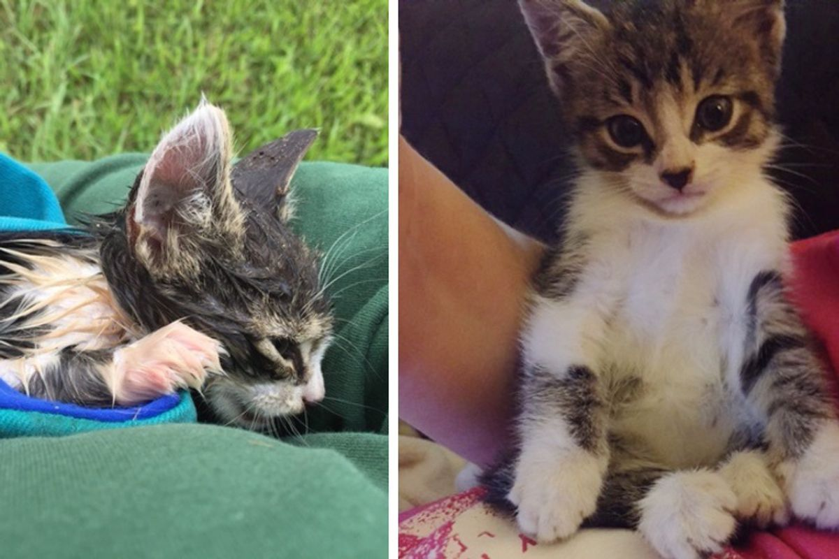 Man Saves Kitten From Drowning After Hurricane and Brings Him Back to Life
