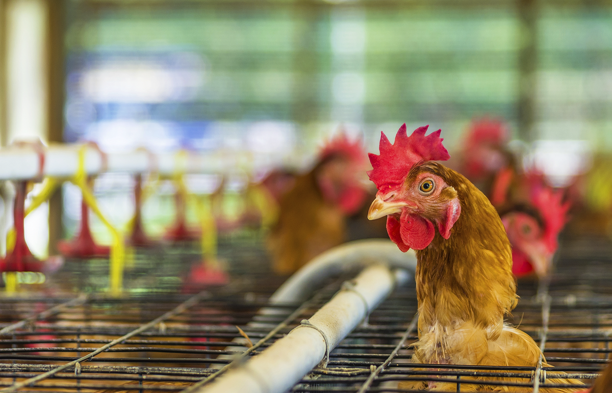 The Terrifying Truth Behind America's Food Industry