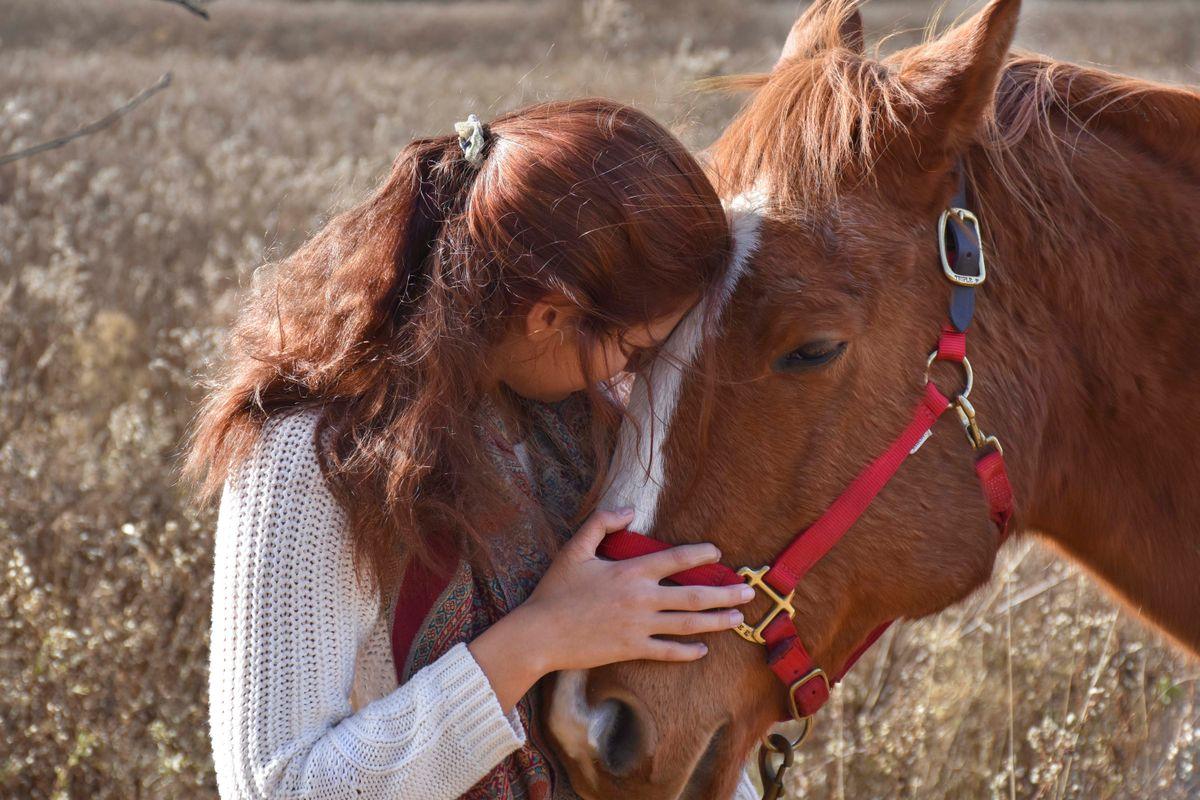 My Horse, My Companion, My Best Friend