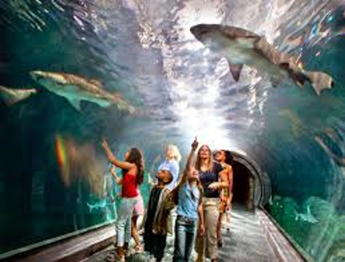 First Time Aquarium Visit Represented By 'New Girl'