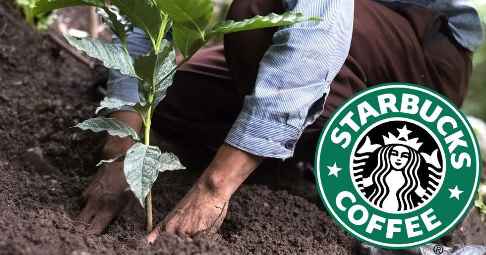 Starbucks Makes Special Delivery to Ensure the Future of Coffee
