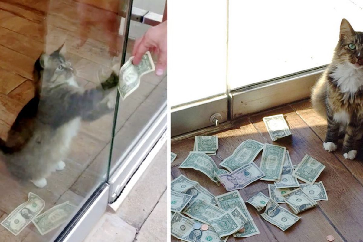 Office Kitty Surprises His Humans When They Find Out He's Been Snatching Money From Passersby