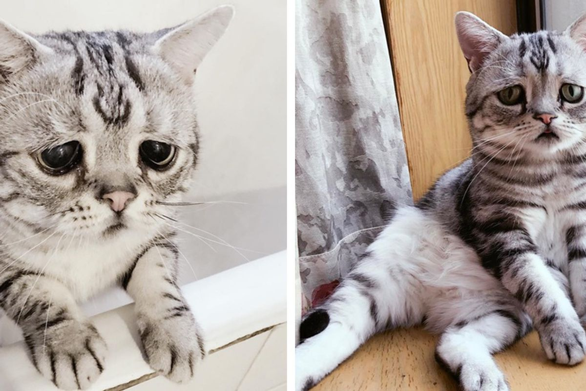 Cat With Permanent Worried Eyes Uses His Charm to Melt Your Heart in These Photos!