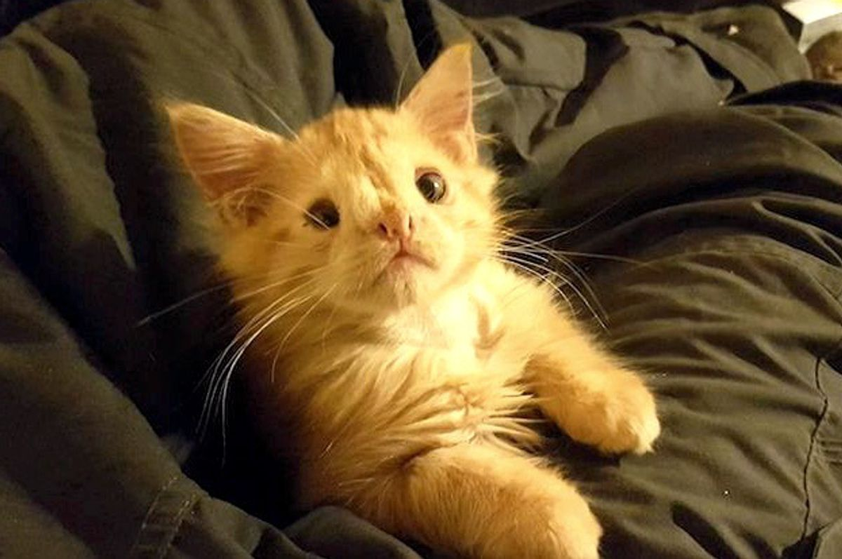 """Kitty Who Was Called """"Too Ugly"""" To Be Loved, Proves Those People Wrong!"""